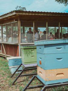 Honey & Bee Deck